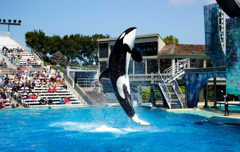 In wake of recent whale-breeding ban, SeaWorld faces important decision amidst controversy