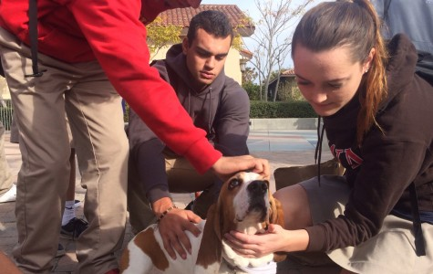 'Revive and Thrive' animal therapy successfully relieved student stress