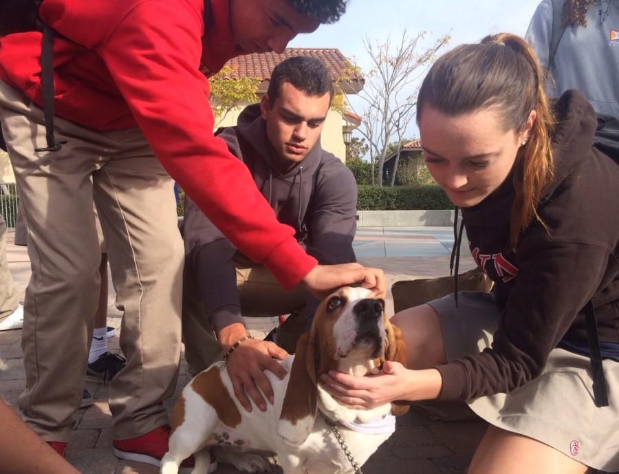 Students enjoyed petting Macy, a Basset Hound