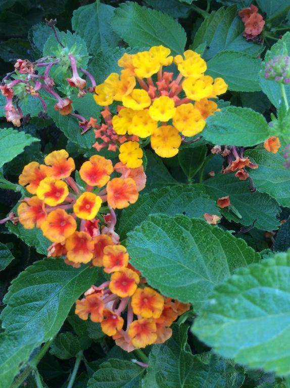 Flowers+Bradly+Polinsky
