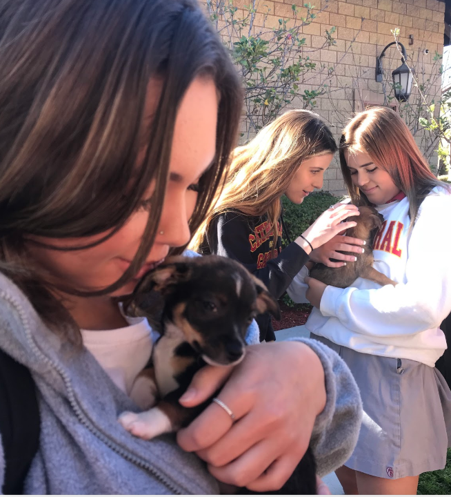 Marley Klein '20 (left) holds an eight-week-old puppy brought to campus by Brigid Hannon, the president of Second Chance Dog Rescue, a nonprofit organization and largest dog rescue in San Diego County, in order to raise awareness for the organization.