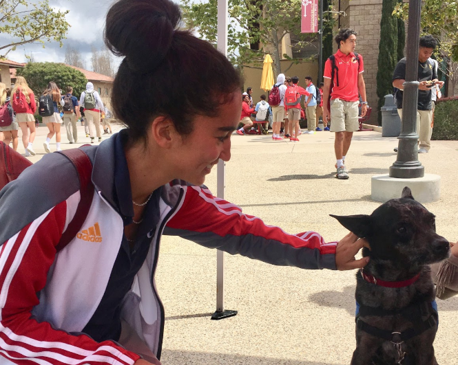 Cathedral Catholic High School student Salina Voegtly '20 pets the therapy dog Bailey, who was brought on campus Wednesday as part of Associated Student Body's Yellow Ribbon Week. Yellow Ribbon Week focuses on mental health and suicide awareness, which ASB emphasized each day of the week with Think Pink Mindfulness Monday, Say Yellow to a Fellow Make a New Friend Tuesday, Don't Feel Blue We Got You Wednesday, Great Times Ahead Wear Red Thursday, and Let Your Colors Shine Friday, which each featured multiple various lunchtime activities.